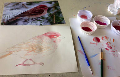 Fat birds are cute birds [WIP] by pottertwins186