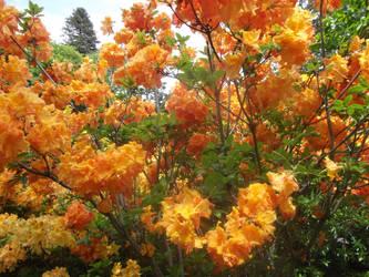 at botancial gardens by bergamont27