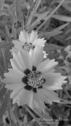 black and white flower by WolvesAngelSiren
