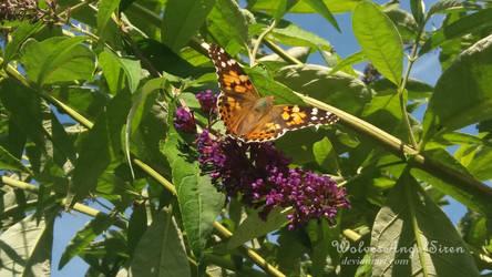 butterfly by WolvesAngelSiren
