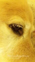 eye by WolvesAngelSiren
