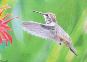 Hummingbird by Starfire-Productions