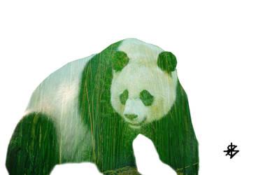 Panda by Senpai115