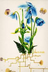 Blue flower by Sugar-Nami