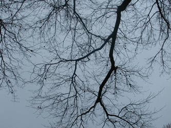 Tree Branches 3 of 3 by stacieyates