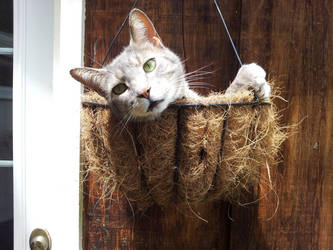 Hanging cat basket by Shadow066