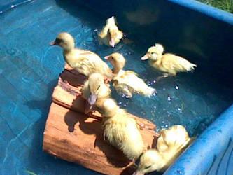 Babies first swim by Shadow066