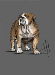 BullDog Sketch study by ArmaniStyles