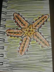 Inktober 8 Star by MaggieRaven