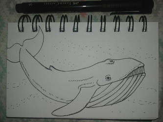Inktober 12 Whale by MaggieRaven