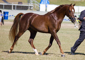 STOCK Gold Coast Show 028 by fillyrox