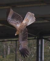STOCK - Australia Zoo 2013-187 by fillyrox