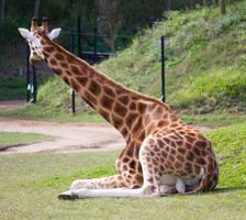 STOCK - Australia Zoo 2013-166 by fillyrox