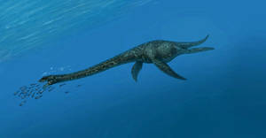 Zarafasaura oceanis by MALvit