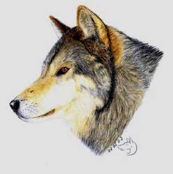 a wolf... by Fjallira
