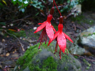 Two wet flowers focused by alloymental