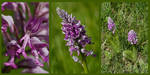 Orchid Triptych by organicvision