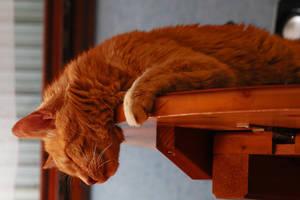 The  Big Sleep by organicvision