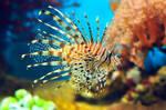 lion fish by Zaratra