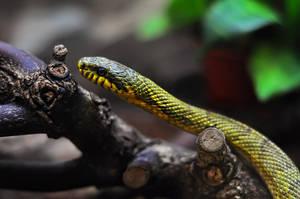 snake by Zaratra