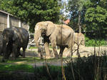 Basler Zoo 2006 by LilChicaB