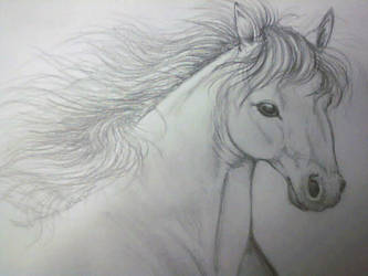 Horse Study by Bluefaerie87
