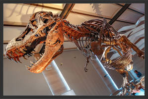 Museum of Natural Science P.5 (refreshed) by Z3dLim