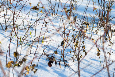 Winter by NanaSilence