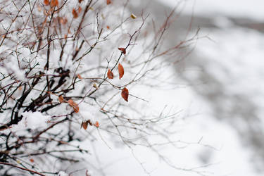 .autumn trace. by NanaSilence