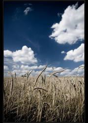 Field III by Mciej