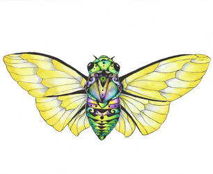 Cicada by tanyadavisart