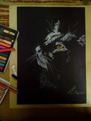 Moon light on black cat by WessamADEN