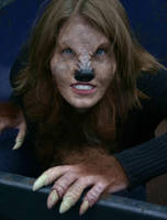 Wolf 3 by hallopino
