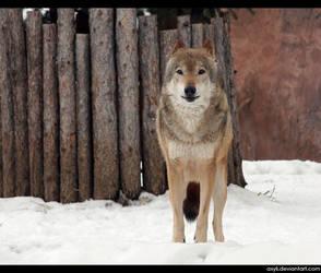 Wolfs glance vol.1 by AXyli