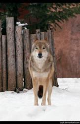 Wolfs glance vol.2 by AXyli