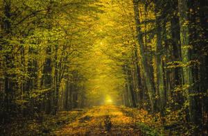 Golden path by bardzomiprzykro