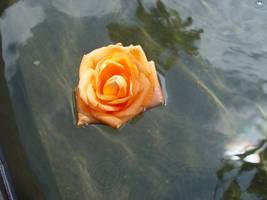 Floating Rose by alienspawn