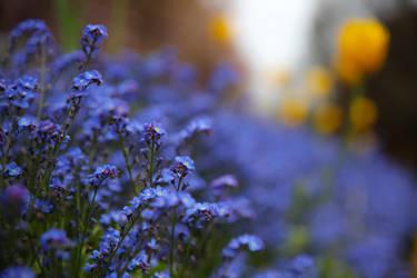 Lamour est bleu by BusterBrownBB
