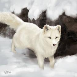 Snow Fox - SpeedPaint by GoldenDruid