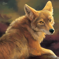Glancing Coyote - SpeedPaint by GoldenDruid