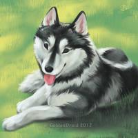 Husky On The Lawn - SpeedPaint by GoldenDruid