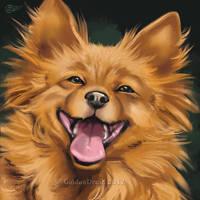Smiling Pomeranian - SpeedPaint by GoldenDruid
