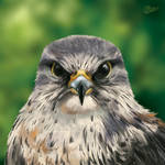 Anger Birb - SpeedPaint by GoldenDruid