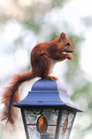 Squirrel on top of a lamp by devirachan