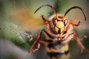 Wild hornet by devirachan
