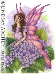Purple Pixie by LinzArcher