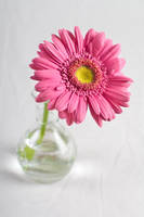 Pink by KhalllodY