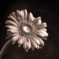 Flowering 2 by KhalllodY