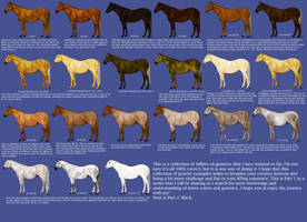 Chestnut Color Genetics Chart by MagicWindsStables