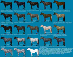 Black color genetics chart by MagicWindsStables